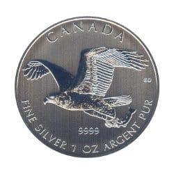 Silber Seeadler